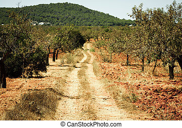 Ibiza island landscape with agriculture fields on red clay soil