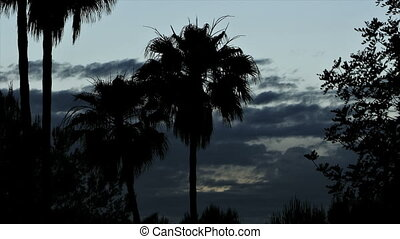 Ibiza Sunset Timelapse - Sunset on Ibiza with palms in...