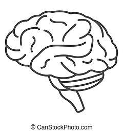 icône, cerveau, style, contour, humain