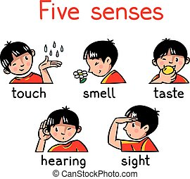 icône, cinq sens, ensemble