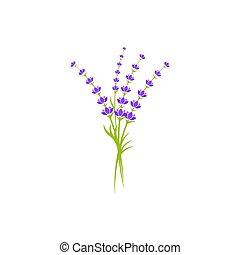 icône, fleur lavande, vecteur, illustration