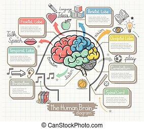 icônes, set., diagramme, cerveau, humain, doodles