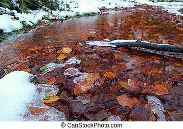 Ice and leaves in a puddle