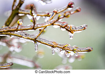 Ice clinging to branches after snowstorm