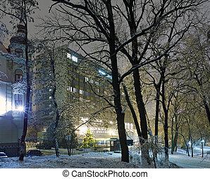 ice-covered, árvore, em, noturna, cidade, park.