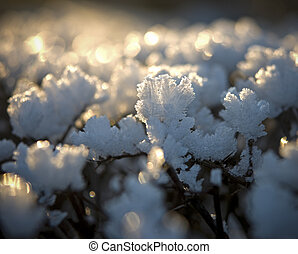 Ice crystals on a bush