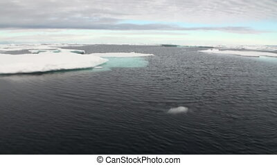 Ice floes in Arctic Ocean.