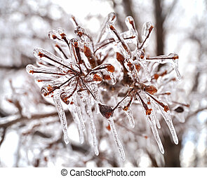 ice on a tree branches