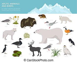 Ice sheet and polar desert biome. Terrestrial ecosystem...