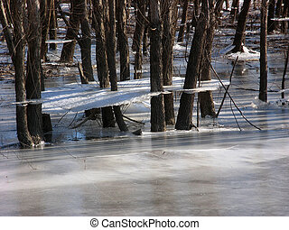 Ice shelf on trees in flooded and frozen wetland.