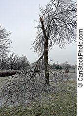 Ice storm damage - tree with broken off branch due to the...