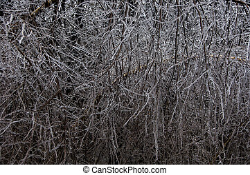 Ice Storm - Heavily laden tree branches folling a severe ice...