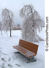 Ice Storm - Trees and banch covered in ice after a major...