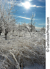 Ice Storm - Trees and plants covered in ice after a major...