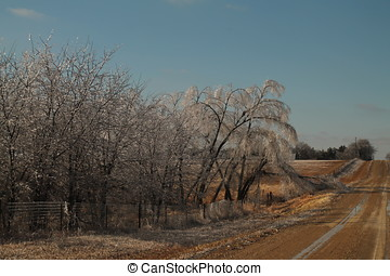 Ice Storm - A tree fell after an ice storm due to the weight...