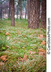 ice the grass