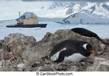 icebreaker sailing on the scored ice Antarctic Strait near the p