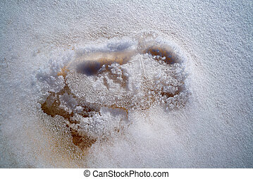 Iced footprint on white snow