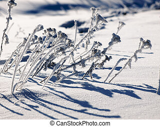 Iced grass in a winter field
