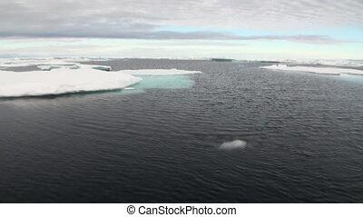 Ice floes in Arctic Ocean.