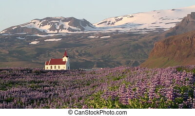 Steady shot of Iceland Mountain with one house and purple flowers
