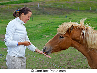 Icelandic Horse - Beautifull young woman feeding the...
