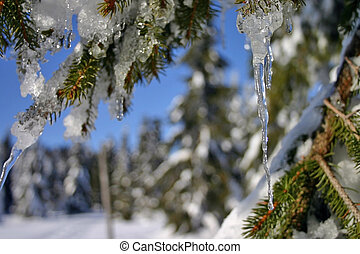 icicle in the forest