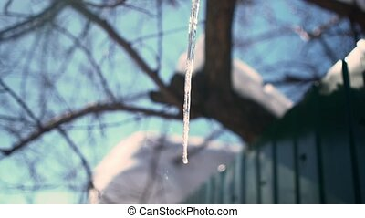 Icicle on a background of blue sky, sun and trees