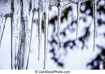 Icicles hanging from the Roof in Winter