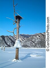 Icicles on a tree, background of mountains in the lake, bird's nest