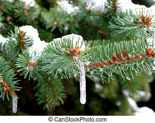 Icicles on the fir tree