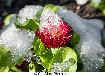 Icing on flower