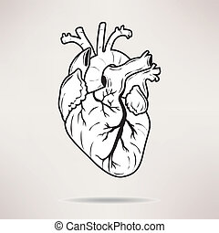 Icon Body heart icon. On the white background. Vector illustration