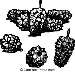 Icon of mulberry, vector illustration stylized as engraving.