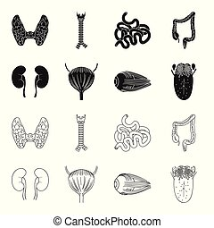 icone, bulbo oculare, stile, casato, simbolo, nero, web., vescica, tongue., illustrazione, contorno, set, collezione, vettore, umano, rene, organi