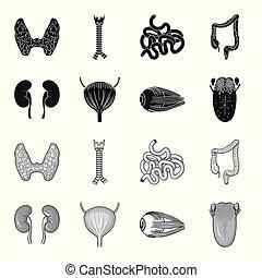 icone, bulbo oculare, stile, casato, simbolo, nero, web., vescica, tongue., illustrazione, set, collezione, vettore, monocromatico, umano, rene, organi