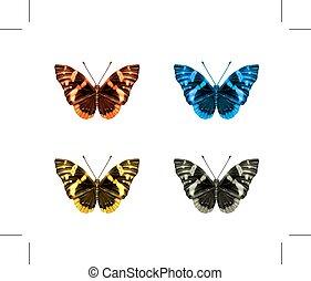 icone, farfalle