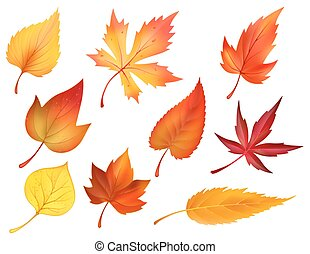 icone, foglie, autunno, vettore, fogliame, cadere, cadere