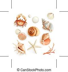 icone, seashells