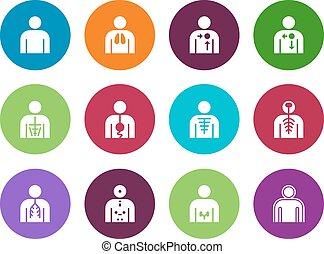 icone, sistema medico, fondo., vettore, cerchio, organi, bianco