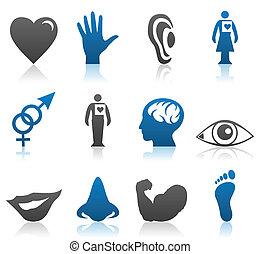 iconen, van, onderdelen, van, een, lichaam