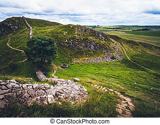 Sycamore Gap - Iconic Sycamore Gap on Hadrian's Wall in ...