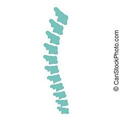 icono, espina dorsal, vector