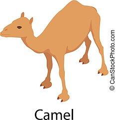 icono, isométrico, estilo, camello