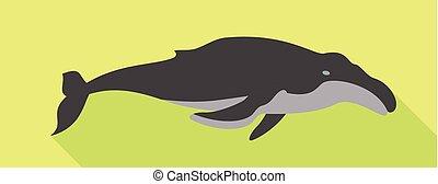 icono, plano, ballena, estilo, minke