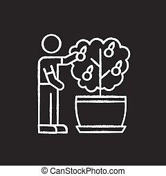 icono, plant., cuidado, fruta, fruiting, ilustración, vector...