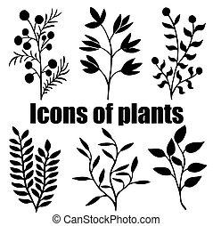 iconos, de, plants., herbarium., grass., plants., silhouettes.