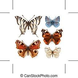 iconos, mariposas, vector