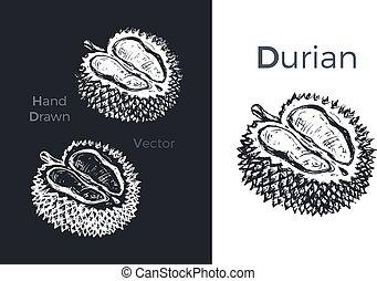 icons., 手, ベクトル, イラスト, 引かれる, durian