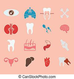 icons of internal human organs Flat design